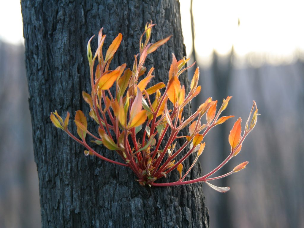 GR&W - Bushfire regrowth